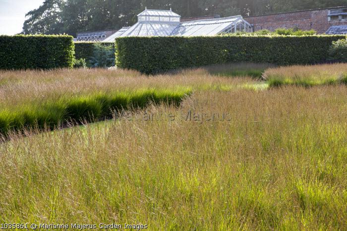 Meadow of Molinia caerulea