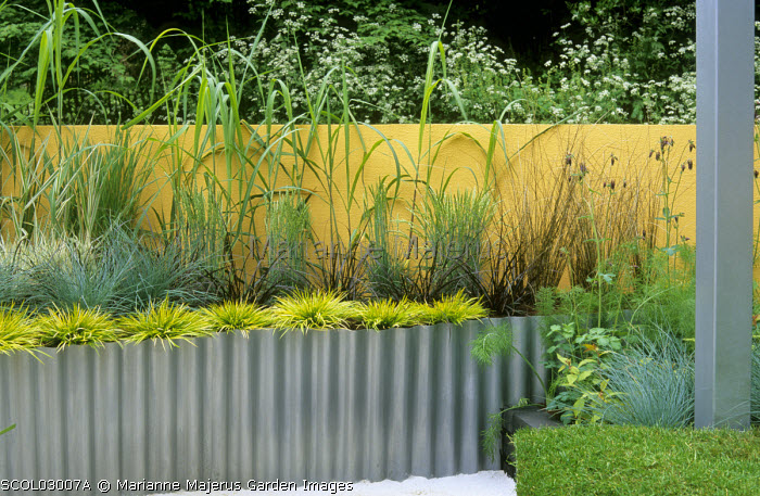 Yellow painted wall, raised bed edged with corrugated iron, grasses