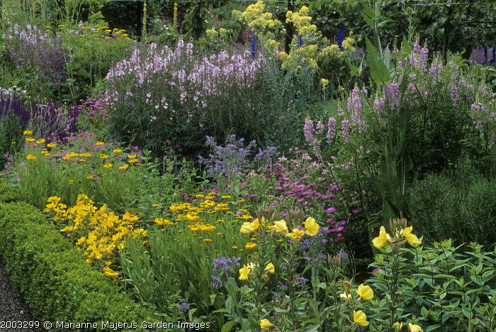 Summer border with box edging