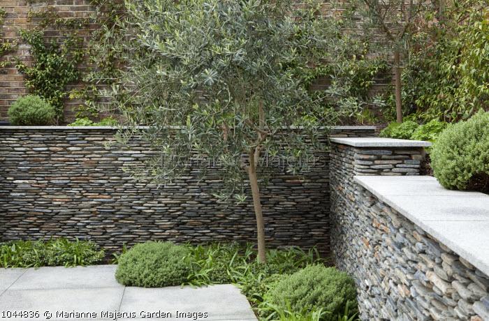 Olive tree, dry-stone wall