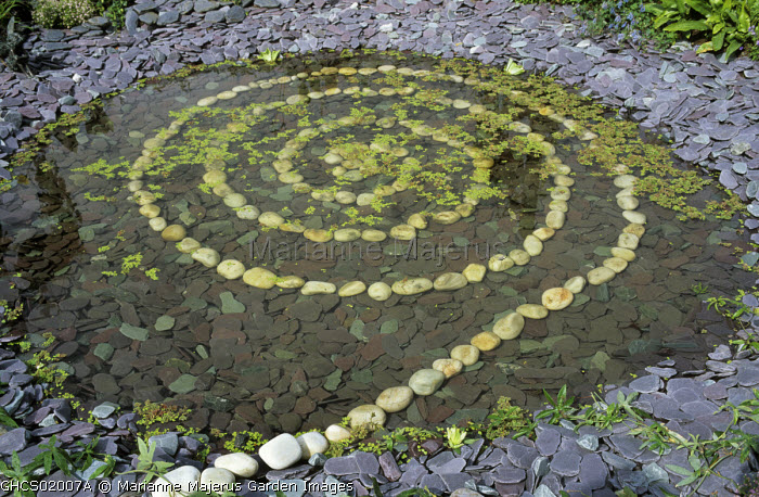 White cobbles in circular spiral pattern in pond, slate chippings Lemna minor