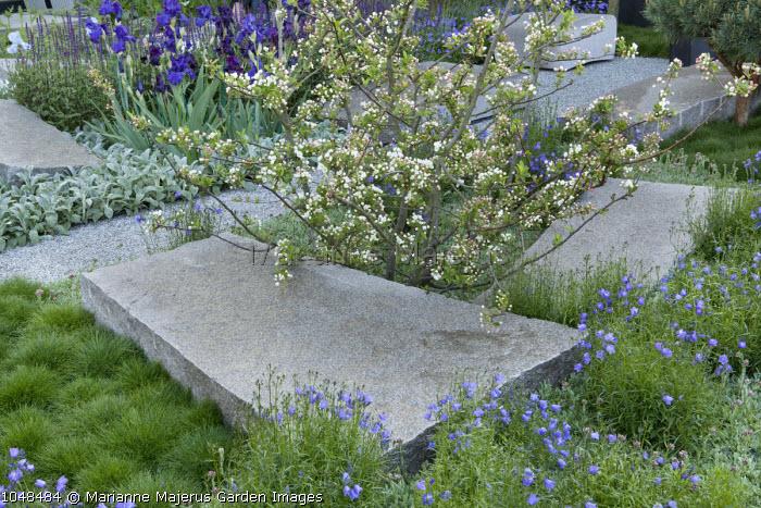 Malus sargentii, Campanula rotundifolia, Festuca gautieri, granite boulders