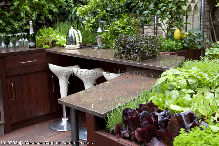 Outdoor kitchen, edible planting, lemon tree