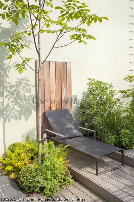 Juglans regia, black recliner on tiered decked patio
