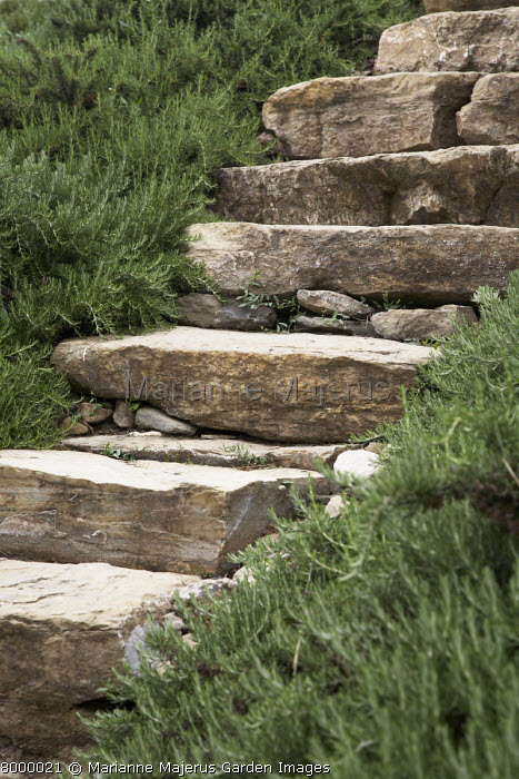 Stone steps surrounded by rosemary