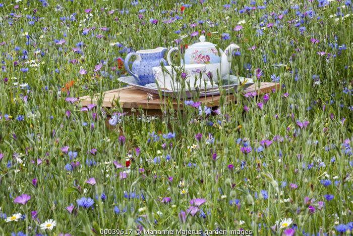 Afternoon tea in a wildflower meadow, Agrostemma githago, Centaurea cyanus
