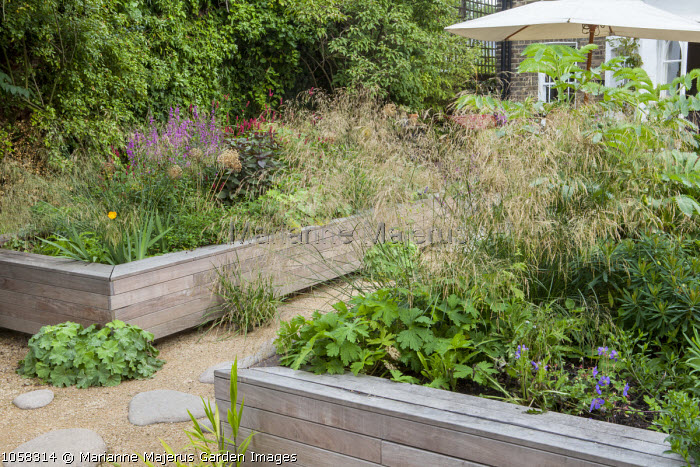Stepping stone path, raised timber beds, Deschampsia cespitosa 'Bronzeschleier', Alchemilla mollis, Lythrum salicaria, Geranium 'Rozanne'