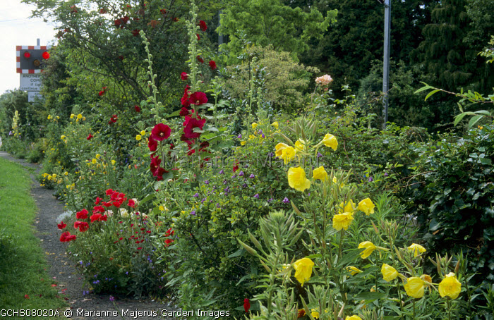 Hollyhocks, evening primroses, poppies, crossing signal