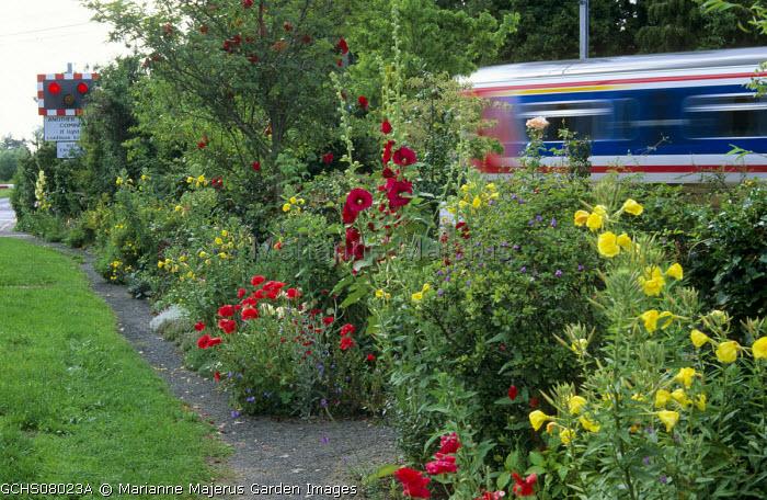 Hollyhocks, evening primroses, poppies, crossing signal, train