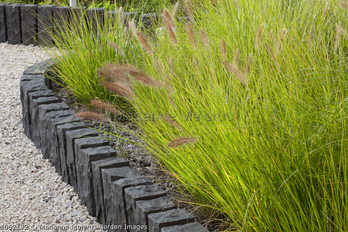 Low slate wall, pennisetum