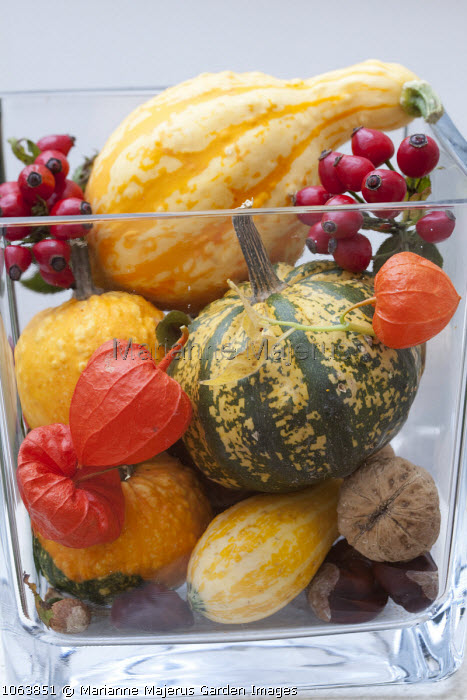 Arrangement of ornamental gourds, physalis, rosehips and nuts in glass vase