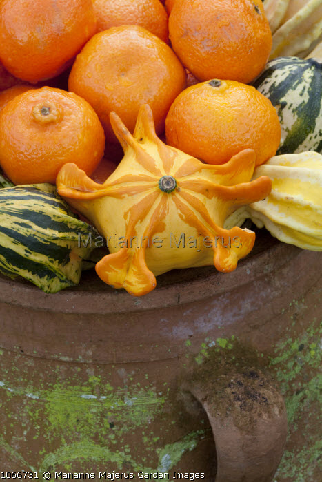 Fruit decorations in terracotta container
