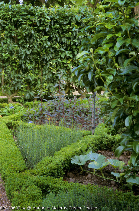 Potager, box-edged beds, pumpkin, Satureja montana, Mentha cervina, Atriplex hortensis var. rubra, U trained apple trees