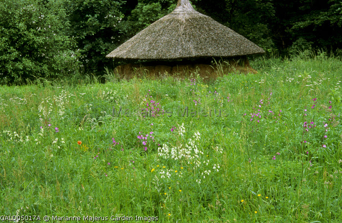 Wild flower meadow with long grass, thatched barn
