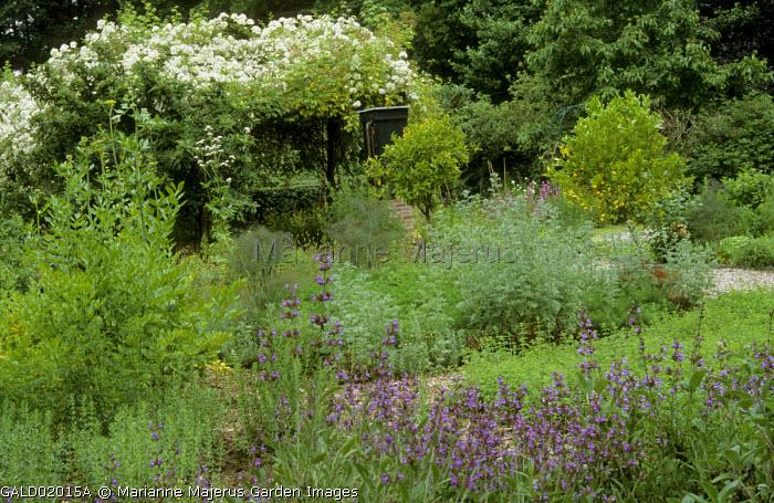 View across herb garden, salvia, fennel, artemisia, citrus trees, pergola with roses