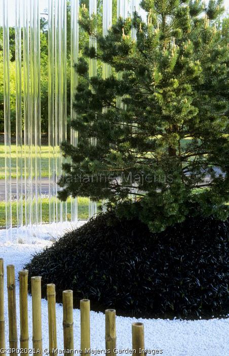 Japanese garden, white gravel with Ophiopogon planiscapus 'Nigrescens', acrylic pipes, conifer