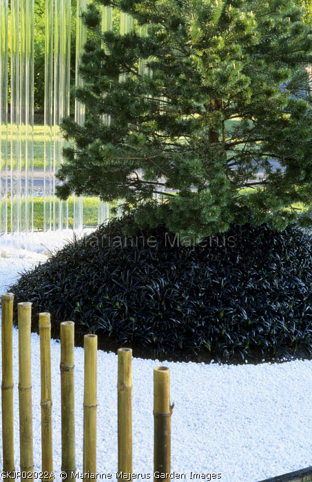 Japanese garden, white gravel with Ophiopogon planiscapus 'Nigrescens', acrylic and bamboo pipes