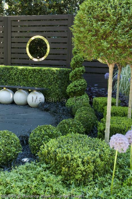 Contemporary bench, clipped box cubes, balls and spirals, Ophiopogon planiscapus 'Nigrescens', ivy, Allium 'Beau Regard'