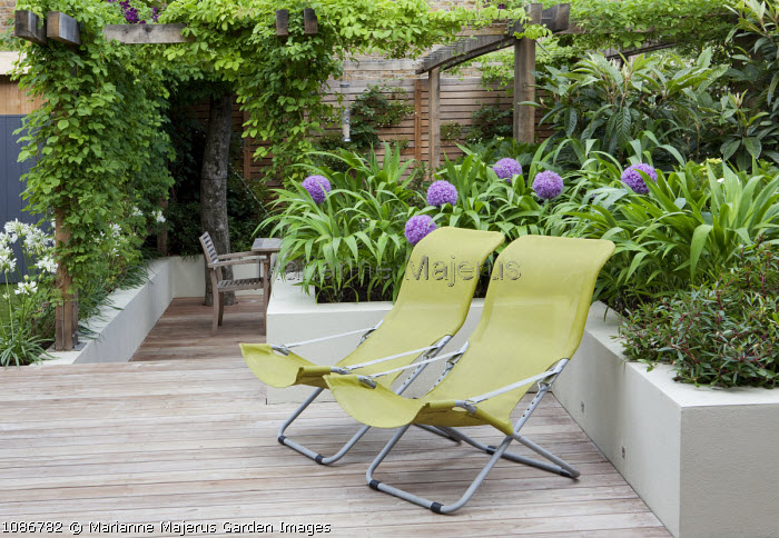 Contemporary yellow deckchairs on terrace, raised bed with alliums, pergola