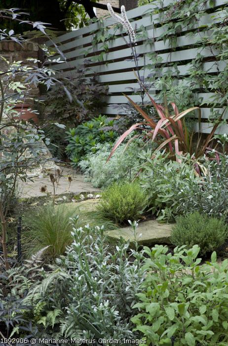 Stone steps, Thymus vulgaris, Salvia officinalis, Convolvulus cneoreum, Ophiopogon planiscapus 'Nigrescens', fence, Actaea simplex Atropurpurea Group 'Brunette', Phormium 'Jester'