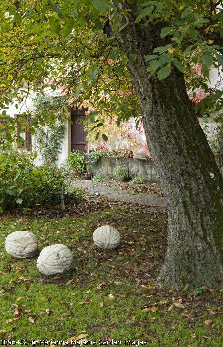 Large walnut sculptures by Landscape Ornament Company on lawn, reconstituted stone