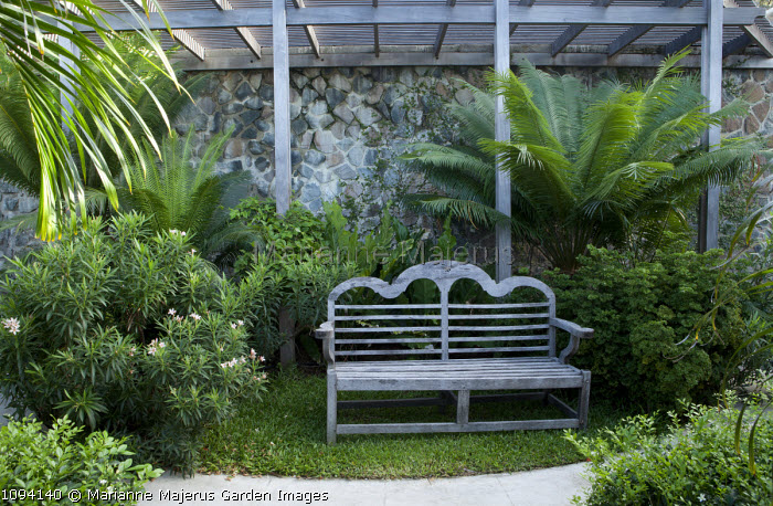 Wooden bench beneath pergola in lush tropical garden, Nerium oleander
