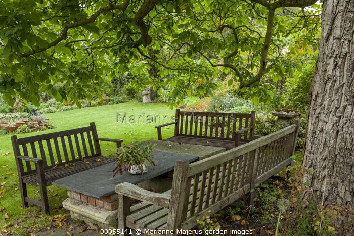 Wooden benches around table under walnut tree