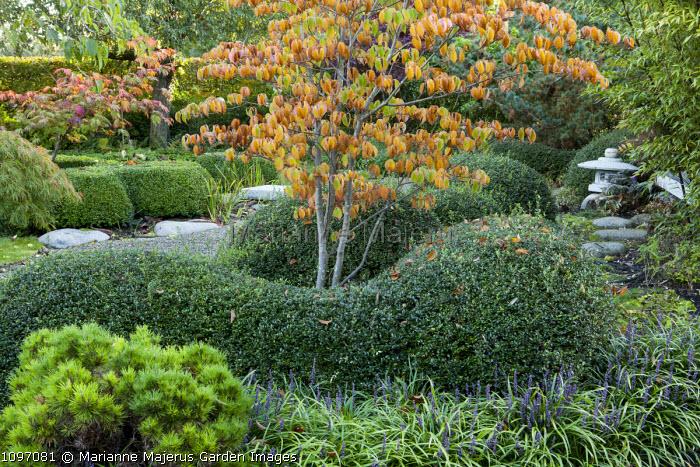 Japanese garden, cloud-pruned shrubs, Liriope muscari, bamboo, Cornus kousa var. chinensis, stone lantern