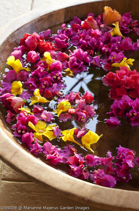 Bougainvillea and allamanda blossom floating in wooden bowl of water