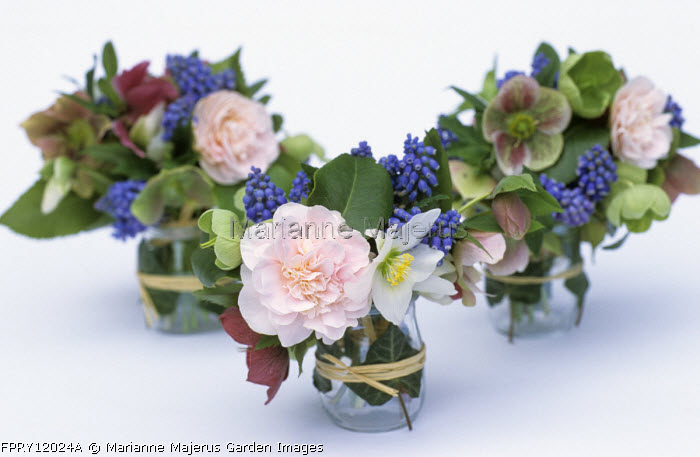 Posies of hellebore, muscari, camellia, cut flower arrangement