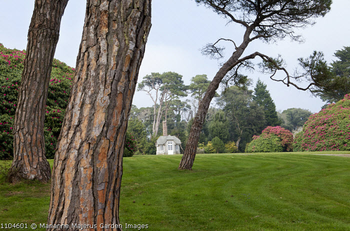 View across lawn to Edwardian summerhouse, Scots pines