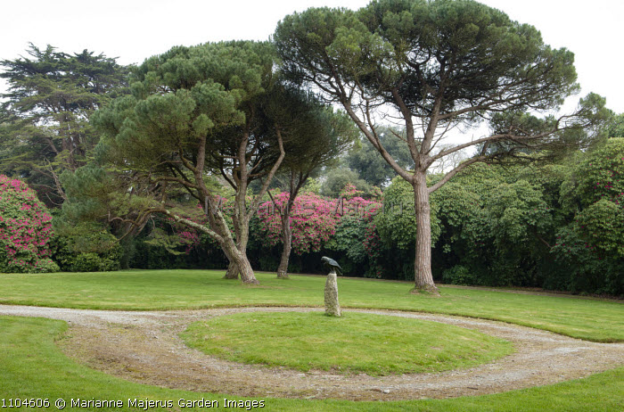 Scots pines, rhododendrons