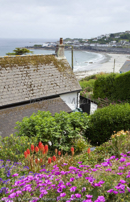 View across rooftop to beach, geraniums, kniphofia