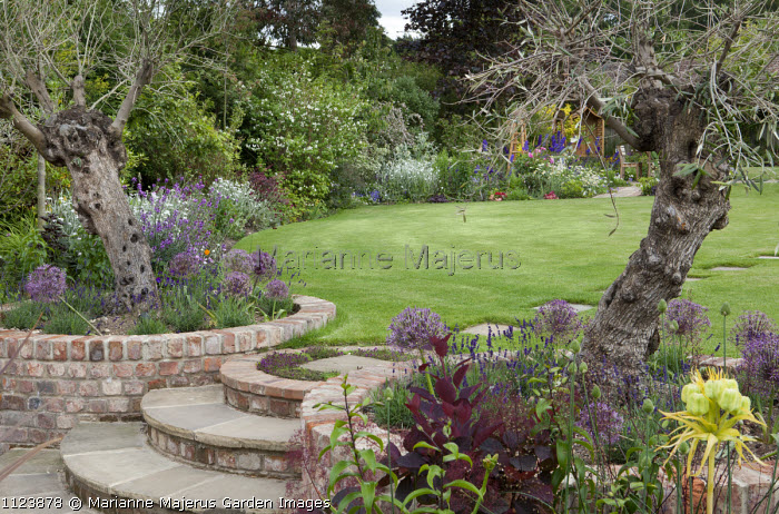 Semi-circular steps to lawn, alliums and lavender in circular brick beds, olive trees