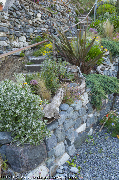 Dry-stone wall planted with drought-tolerant plants, phormium, driftwood