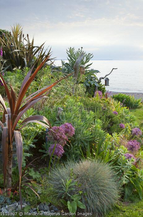 Coastal garden border, Festuca glauca, Allium cristophii, euphorbia, view to sea