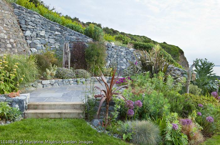 Coastal garden, Allium cristophii, euphorbia, Festuca glauca, phormium