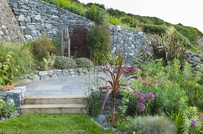 Coastal garden, Allium cristophii, euphorbia, grasses, phormium