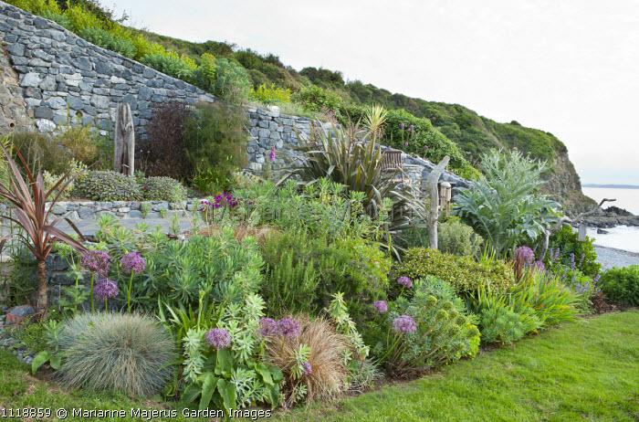 Coastal garden overlooking sea, Allium cristophii, euphorbia, grasses, Festuca glauca, phormium