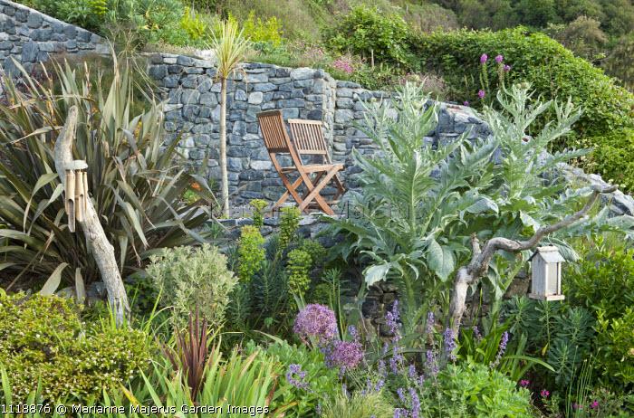 Wooden chairs on terrace, phormium, euphorbia, cynara