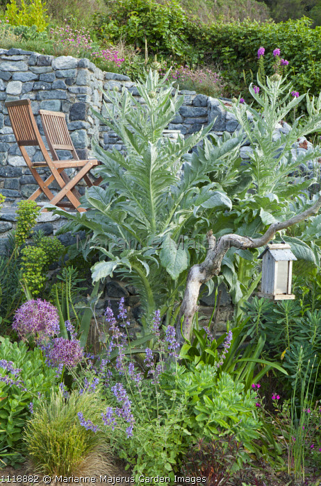 Chairs on terrace, seaside garden, cynara, allium, bird feeder