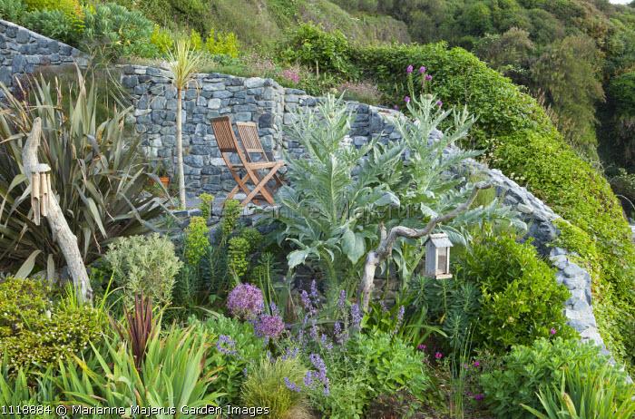 Chairs on seaside garden terrace, phormium, allium, artichoke, euphorbia