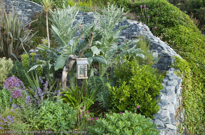 Coastal garden, artichoke, hylotelephium syn. sedum, euphorbia