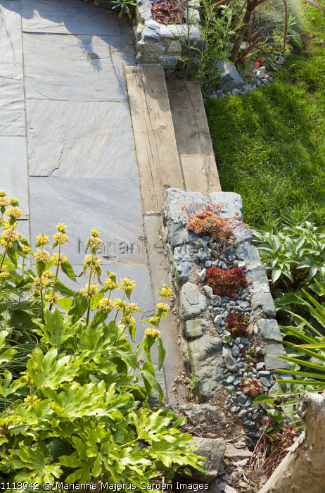 Sempervivums in wall, slate paving, Phlomis russeliana, Fatsia japonica