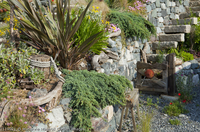 Stone steps in wall, phormium, driftwood gate