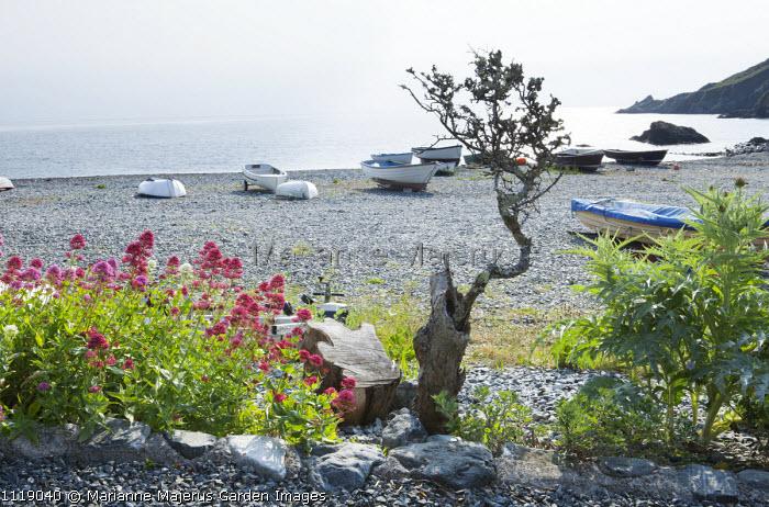Porthallow Cove, Centranthus ruber on shingle beach, boats