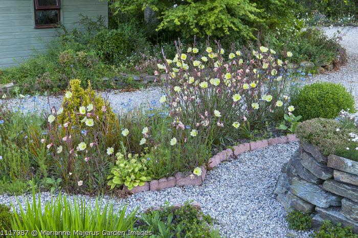 Gravel garden, Oenothera 'Apricot Delight', terracotta border edging