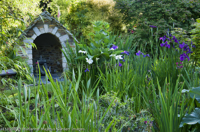 Water house, Iris ensata 'Laughing Lion' and 'Innocence'
