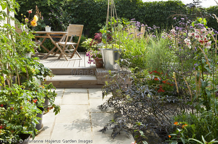 Wooden table and chairs on patio, tomatoes in containers, Lilium 'Scheherazade', Sambucus nigra 'Black Lace'