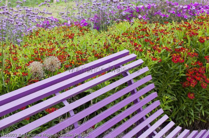 Wavy purple bench, Helenium 'Kupferzwerg', Phlox paniculata 'Düsterlohe' syn. 'Nicky', Verbena bonariensis